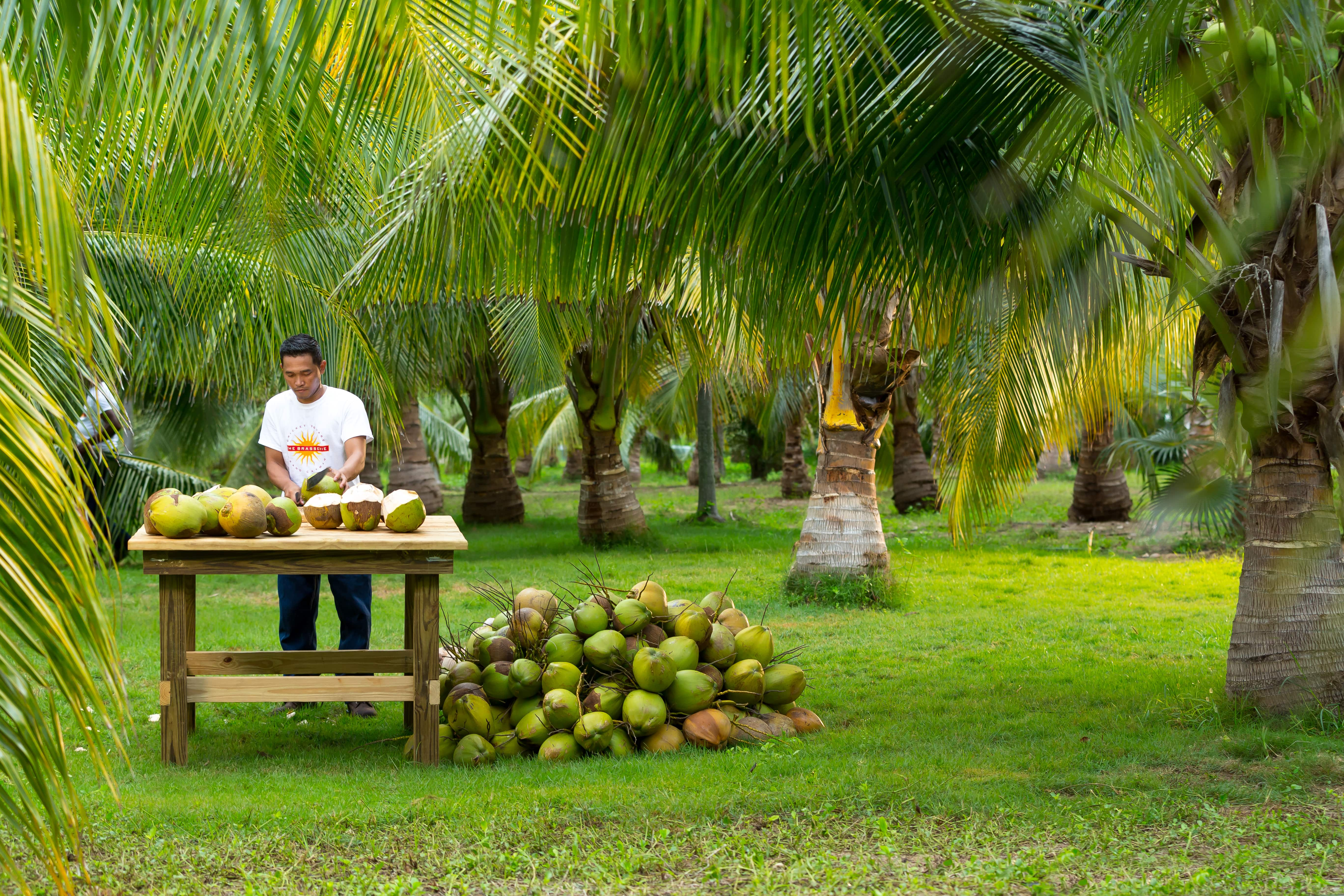 Man chopping coconuts at Brasserie Market Cayman